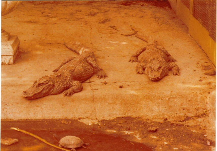 Зоопарк. Крокодилы
