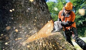 Деревья могут мешать реабилитации участков столичных трасс. Фото: actualitati.md