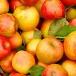 Молдова начала экспорт яблок в Египет