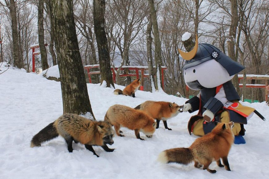 zao-fox-village-japan-wcth05