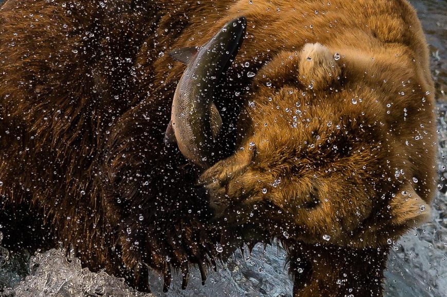 Поймал! Автор фото: Евгений Чеботарев