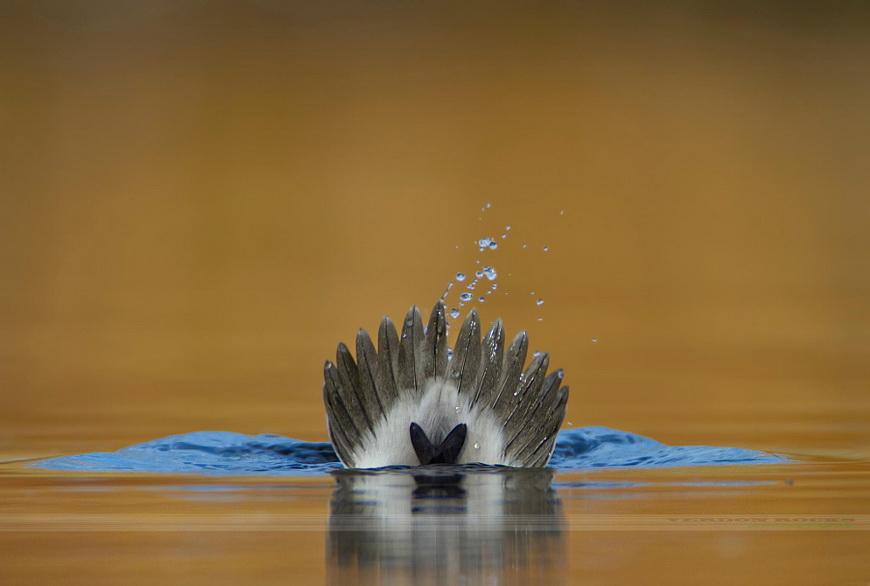 Орёл или решка. Автор фото: Вердон Рокс