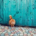 Недельный обзор Instagram: март и коты