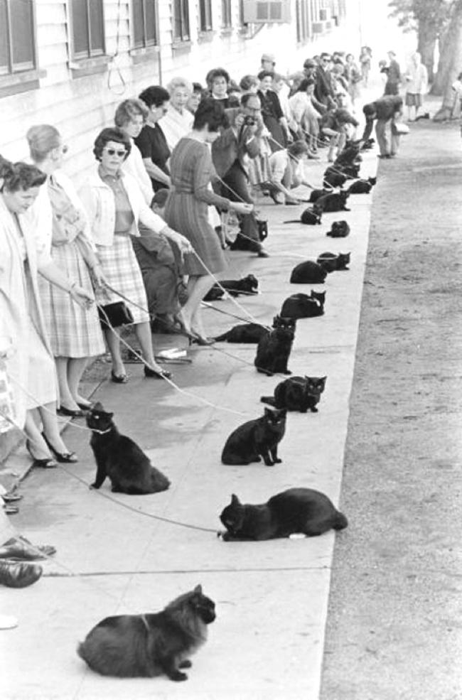 Кастинг на главную роль в голливудском фильме ужасов «Призрак кота». 1961 год.