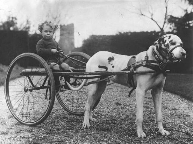 Ребенок в собственной повозке, 1920-е годы.