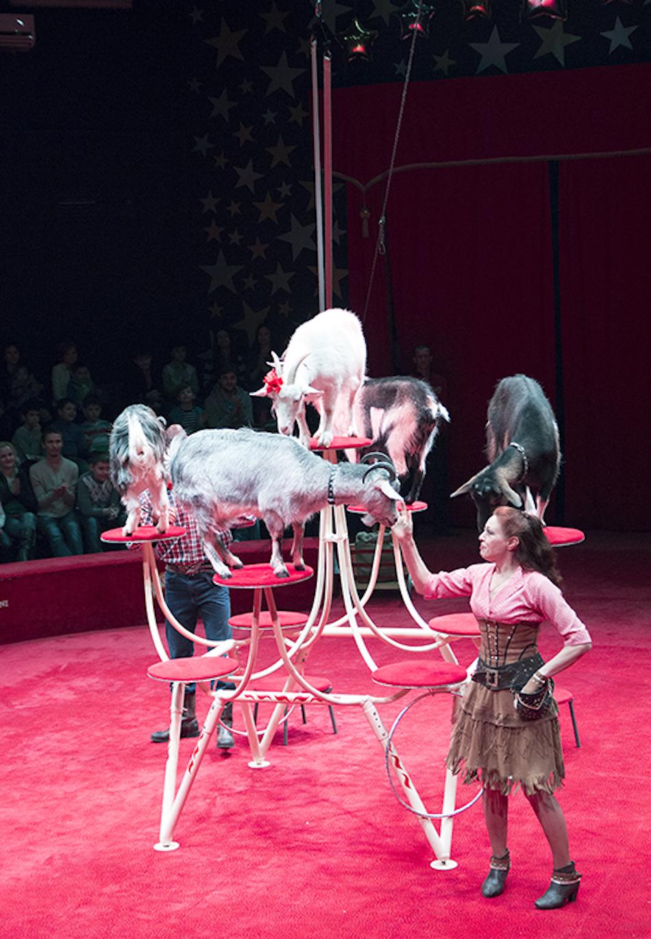 chisinau-circus-20