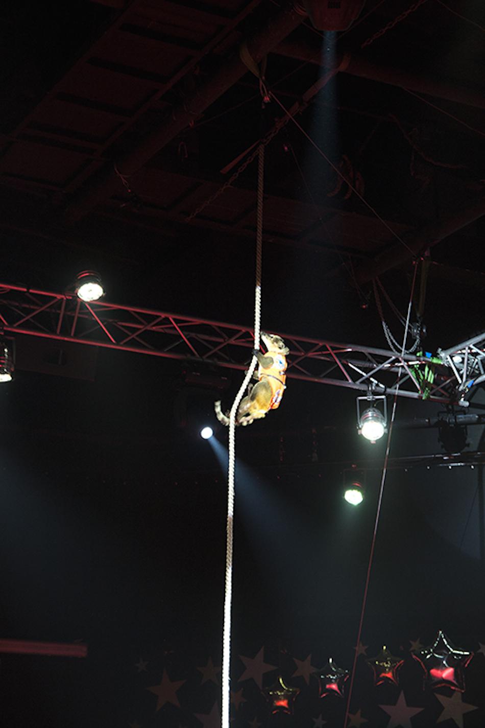 chisinau-circus-29