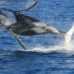 Видео: спасение кита