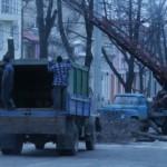 На улице Александри начали вырубать деревья