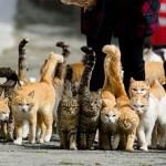 Кошки оккупировали остров в Японии