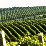Молдавских виноделов приглашают принять участие в стажировке в США