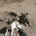 Собачьему приюту «Live Life» нужна помощь при переезде