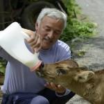 Последний человек в Фукусиме: мужчина, который остался заботиться о животных