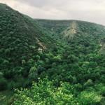 Недельный обзор Instagram: зелень