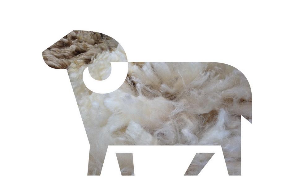 dmitri-moruz_branding-moldova_sheep