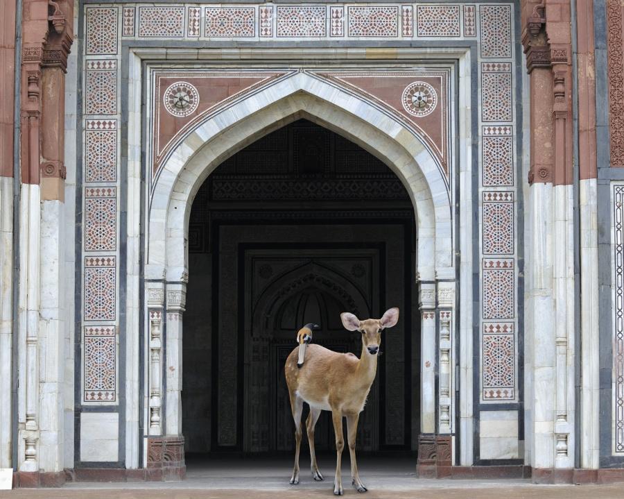 The-Messenger-Purana-Qila-Delhi