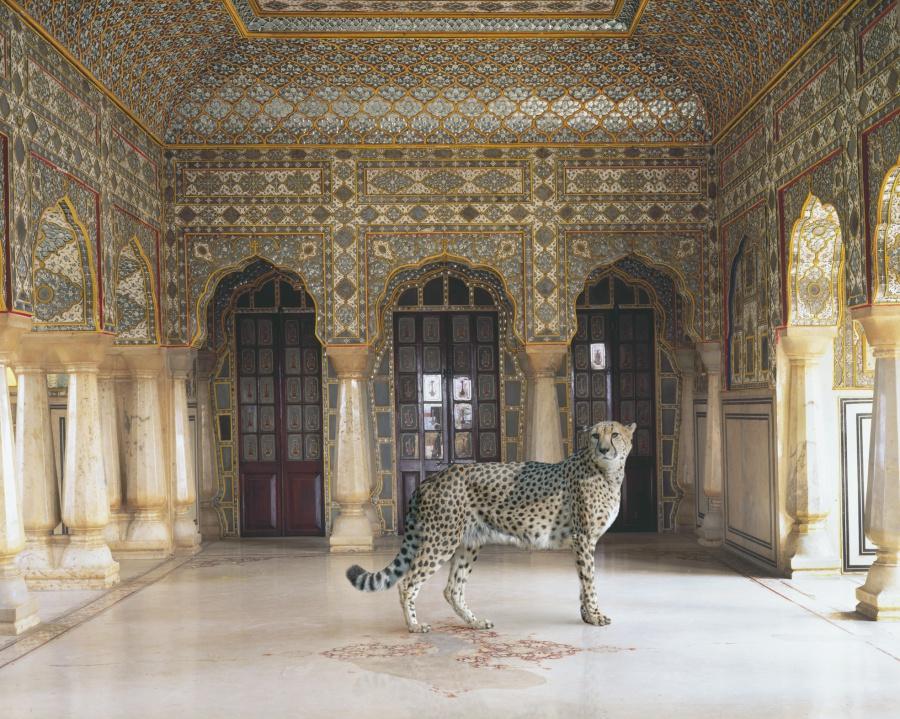 The-Return-of-the-Hunter-Jaipur-Palace-Jaipur