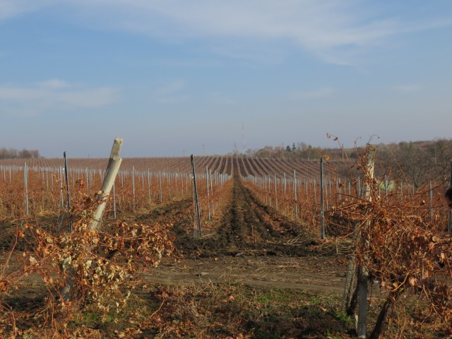 Vineyards-in-Cimislea-and-famous-Cherny-Zom-640x480