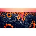 Недельный обзор Instagram: ближе к природе