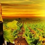Пять «больших» мифов о вине