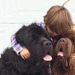 Дружба мальчика, двух гигантских псов и лошади
