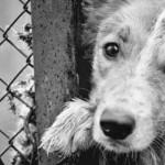 Подпиши петицию: «Молдова без жестокости»!