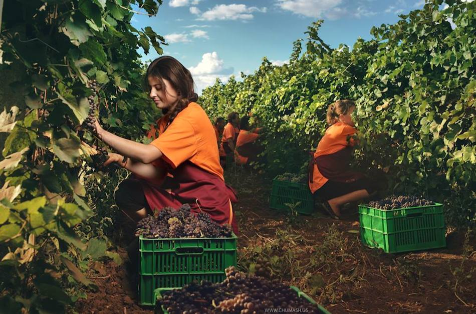 а смуглянка молдаванка собирает виноград... — at Salcuta City.-chumash