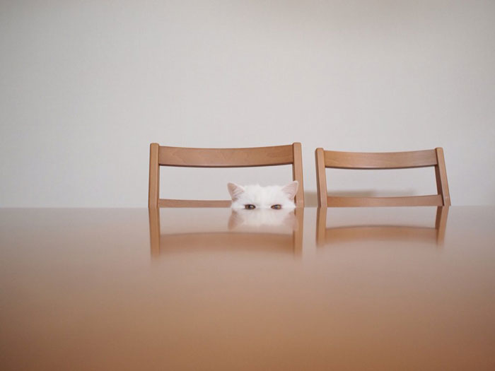 04-cute-japanese-cat