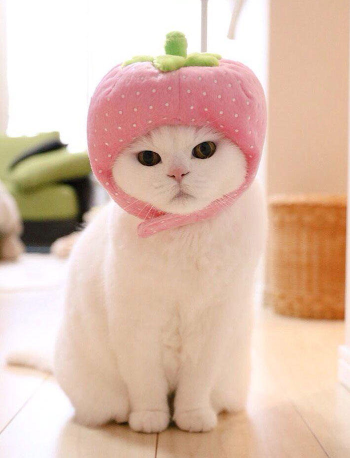 05-cute-japanese-cat