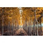 Обзор Instagram: Осень. Очень