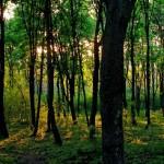 Волонтеры проекта «Plantăm fapte bune» озеленят Тогатино в эти выходные