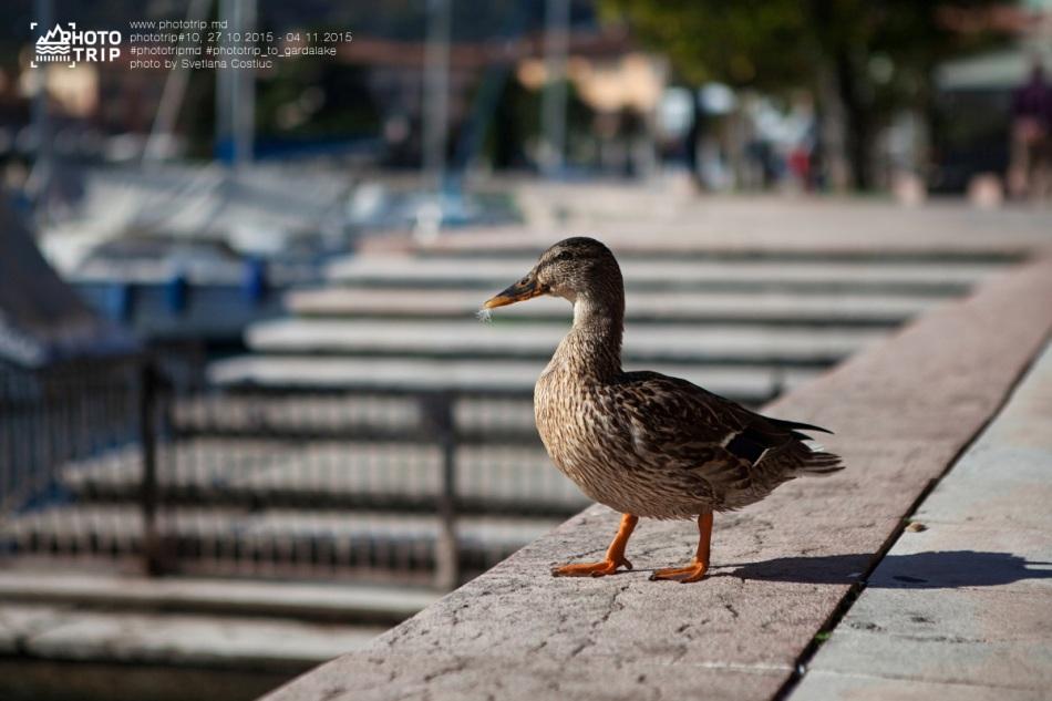 Phototrip_locals (4)