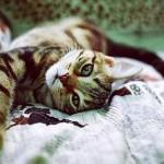 Обзор Instagram #localsmd: осенние коты