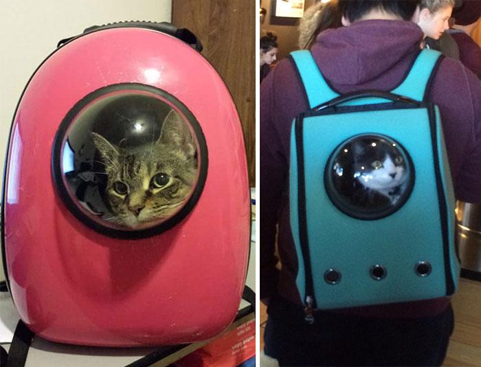01-Cat-Pack