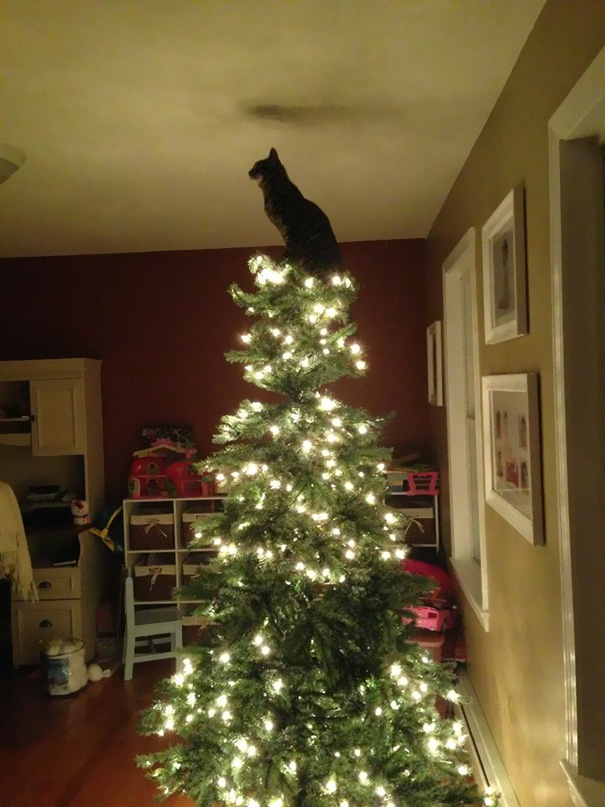 02-cats-destroying-trees-christmas