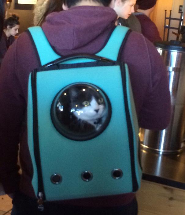 03-Cat-Pack