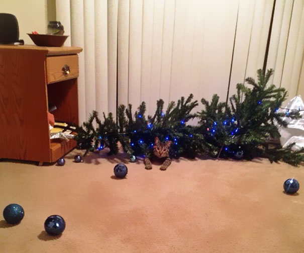 03-cats-destroying-trees-christmas