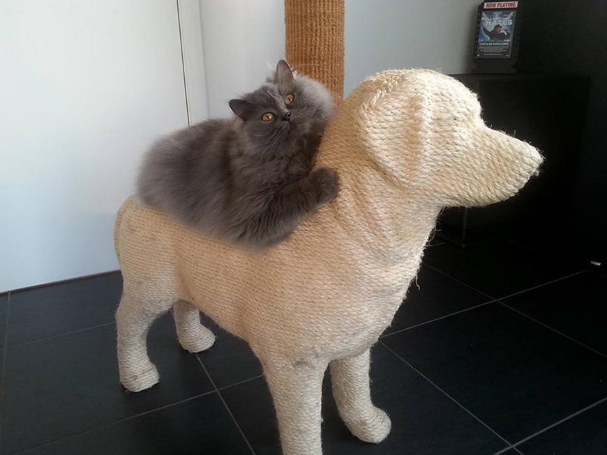 03-dog-shaped