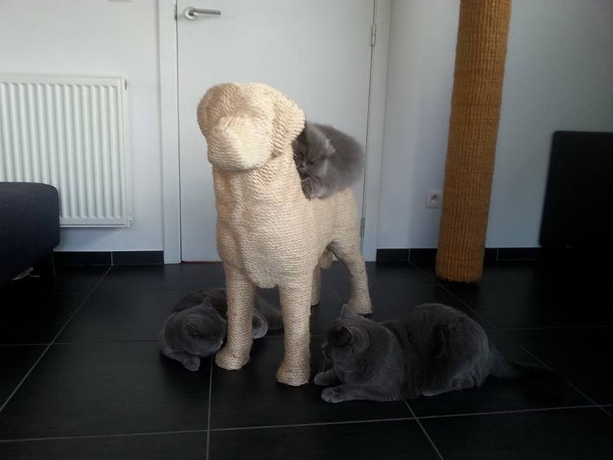 04-dog-shaped