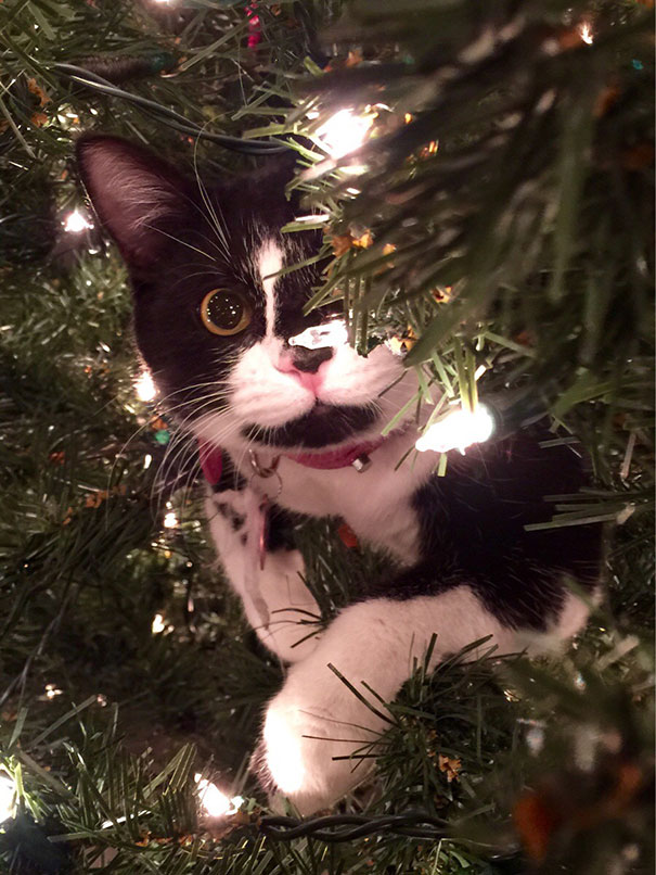05-cats-destroying-trees-christmas