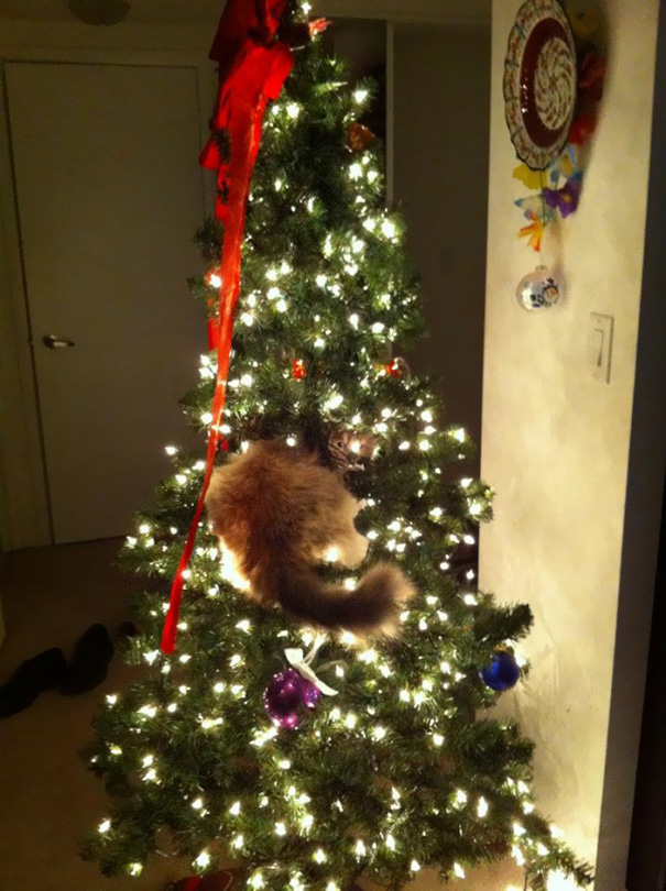 07-cats-destroying-trees-christmas