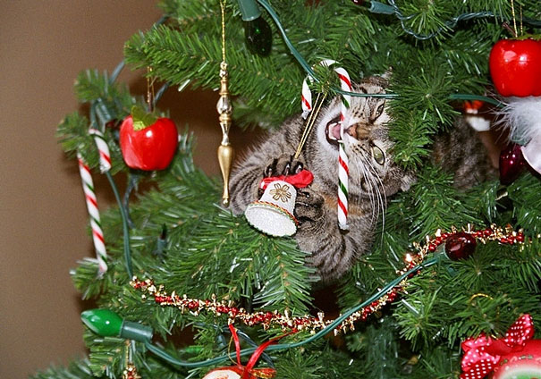 08-cats-destroying-trees-christmas