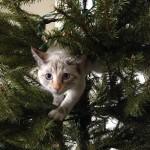 15 котов, которые помогли украсить новогоднюю ёлку