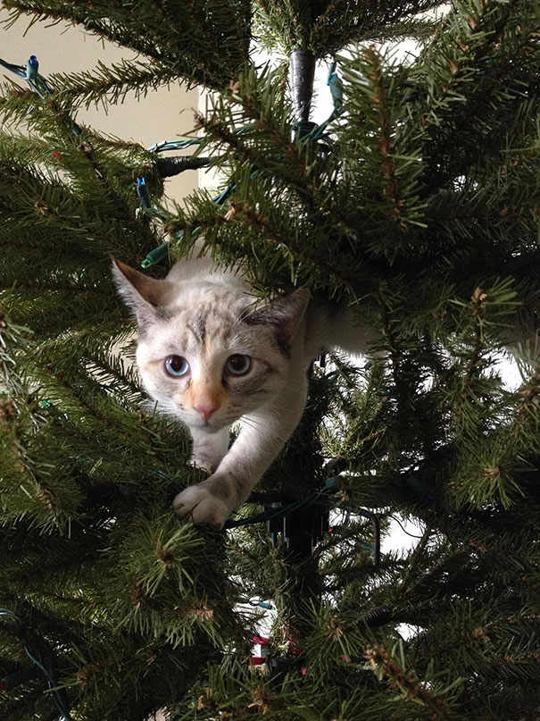 09-cats-destroying-trees-christmas