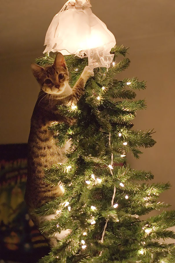 12-cats-destroying-trees-christmas