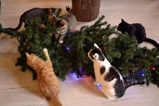 14-cats-destroying-trees-christmas