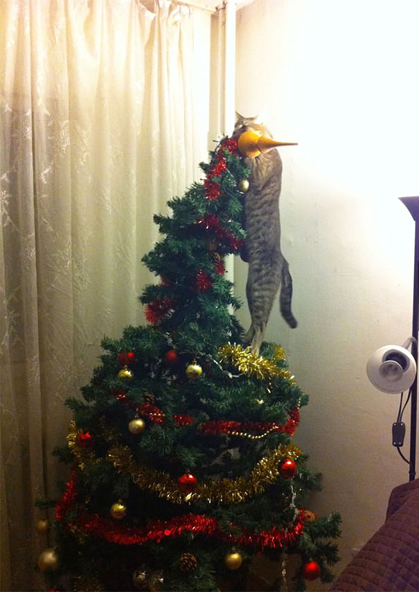 15-cats-destroying-trees-christmas