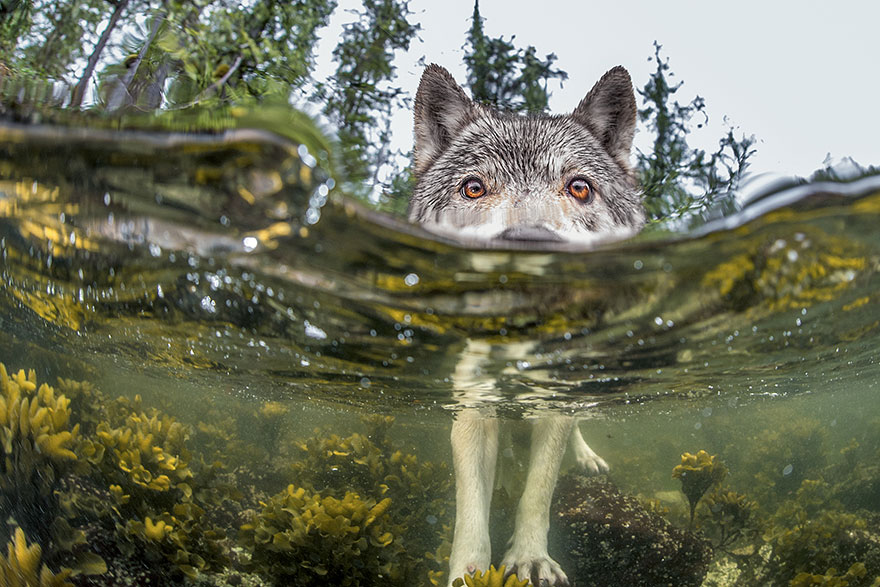 national-geographic-photo-of-the-day-internet-favorites-2015-6