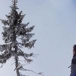 Старейшее дерево в мире возрастом около 9,5 тыс. лет находится в Швеции