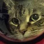 Рюкзак-переноска с иллюминатором для котов позволит домашнему питомцу почувствовать себя космонавтом